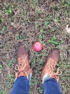 apple picking2