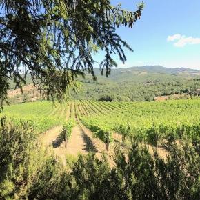 Travel Journal: Italy – Part 1, TuscanyActivities