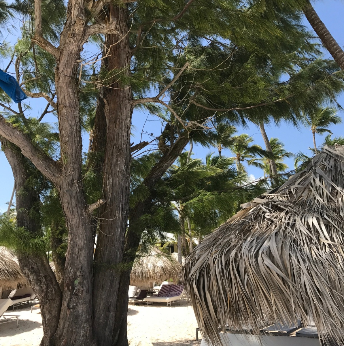 Travel Journal: Punta Cana